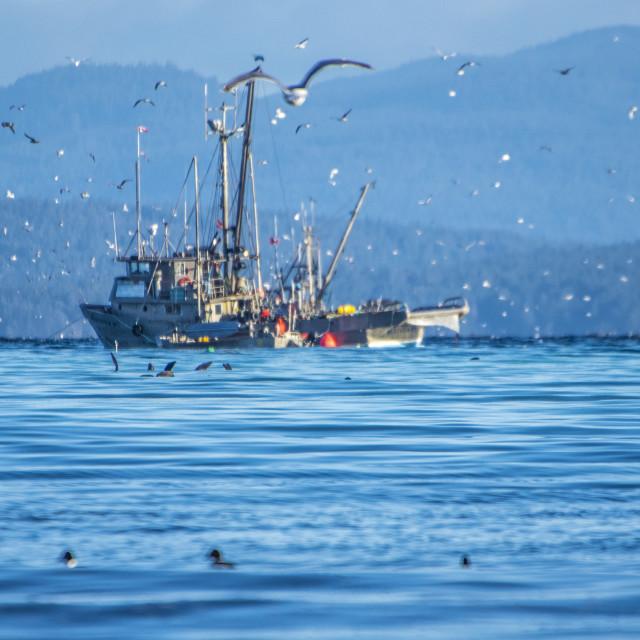 """Fishing Trawler"" stock image"