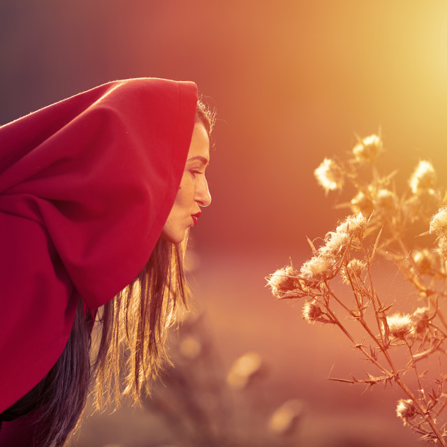 """""""Red Riding Hood at sunset in the forest"""" stock image"""