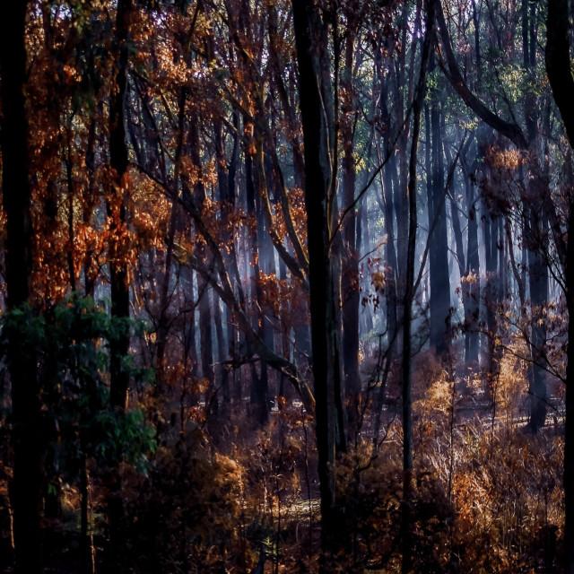 """Burnt Bush"" stock image"