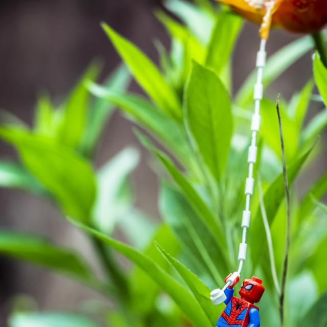 """""""Flower swing"""" stock image"""