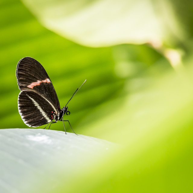 """""""closer shot of Butterfly sitting on a leaf"""" stock image"""