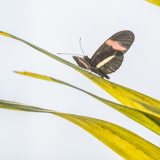 """""""Butterfly sitting on a leaf"""" stock image"""