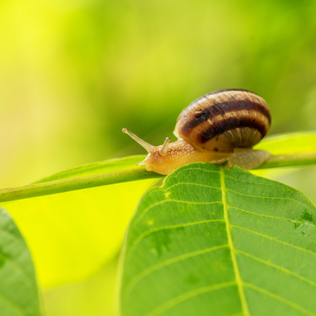 """""""Close up photography of snail in nature."""" stock image"""