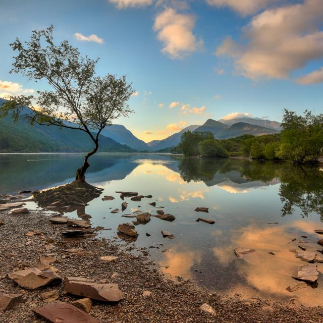 """Lonely Tree of Llyn Padarn"" stock image"