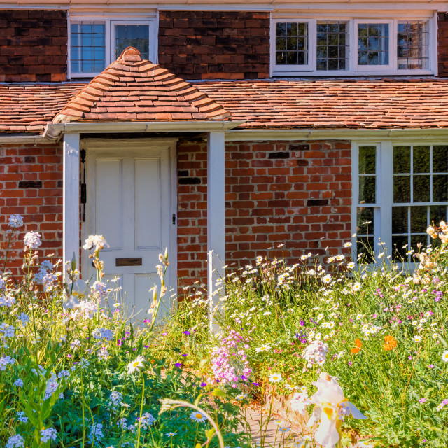 """Cottage flowers"" stock image"