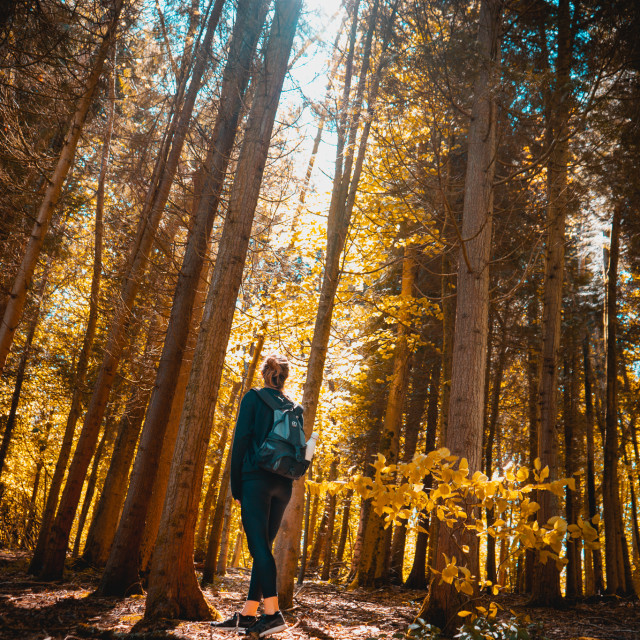 """""""Lost in the woods"""" stock image"""