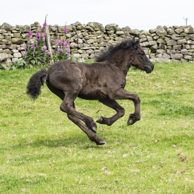 """""""run baby run."""" stock image"""