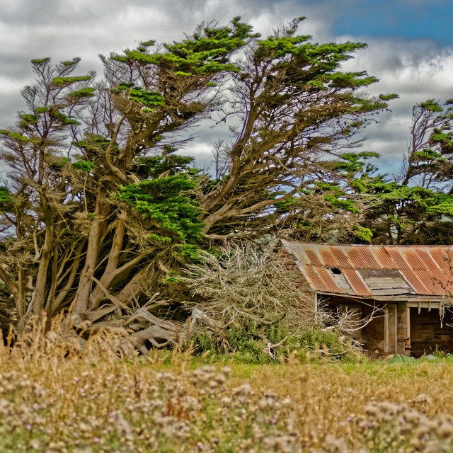 """A disused farm shed in the Catlins, New Zealand"" stock image"