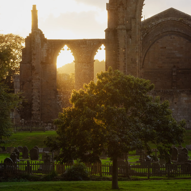 """""""Golden hour in Bolton Abbey"""" stock image"""