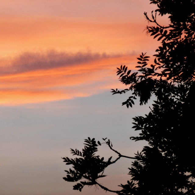 """""""Leaves at Sunset"""" stock image"""