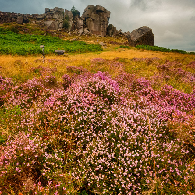 """Cow and Calf, Ilkley"" stock image"