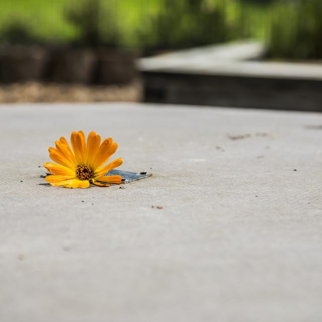 """Urban flower"" stock image"
