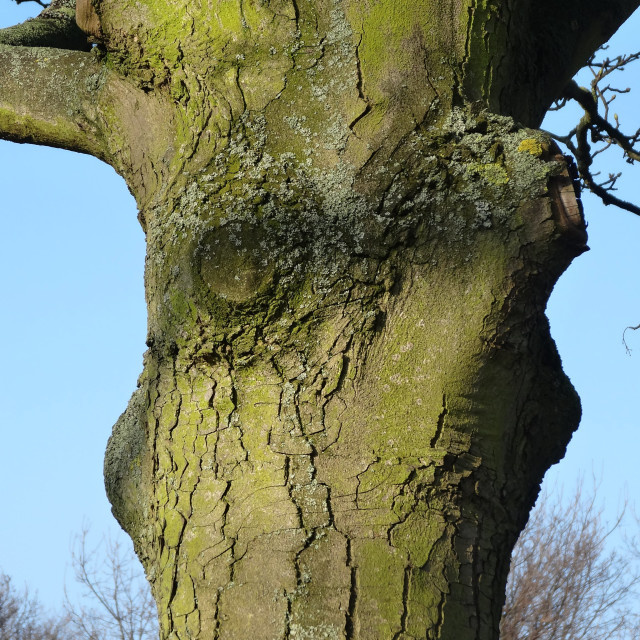 """Victoria Park Tree"" stock image"