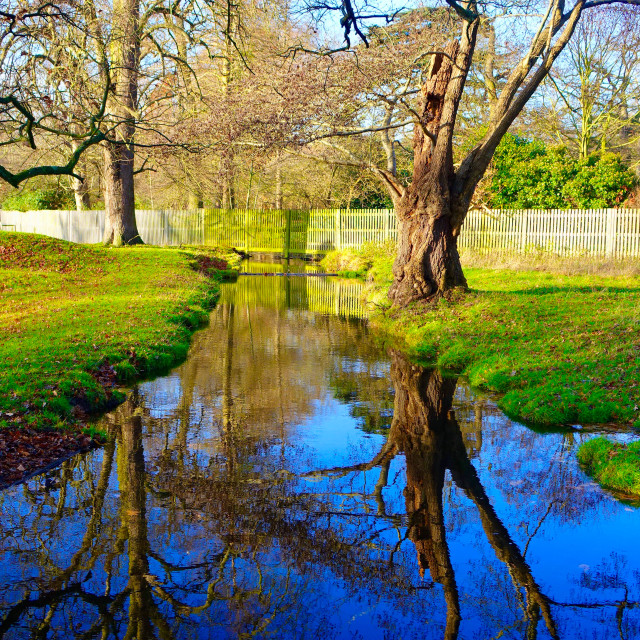 """""""Tree Reflection In Water"""" stock image"""