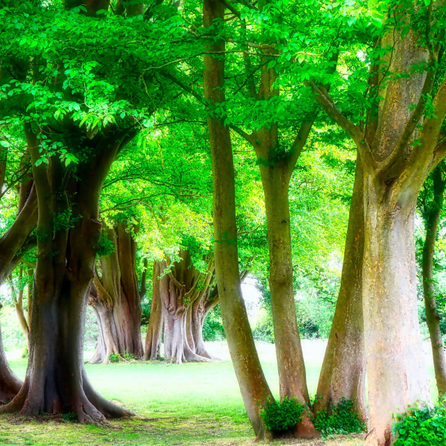 """Tree Trunks & Foliage"" stock image"