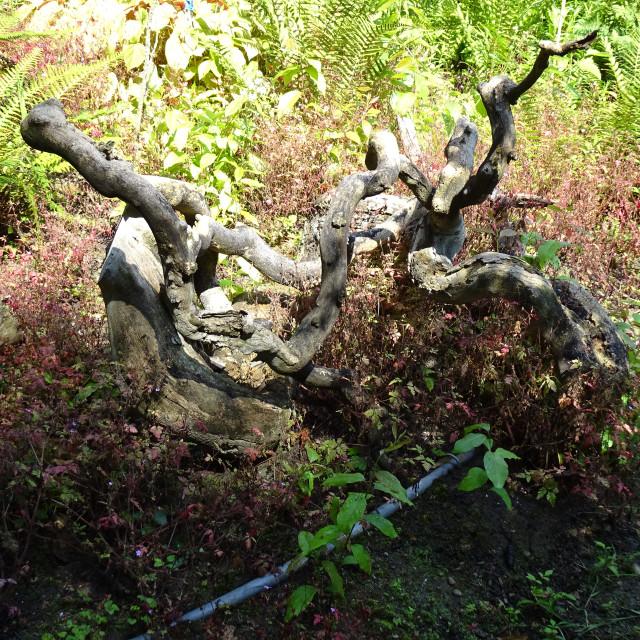 """Details of a secret nature in botanical garden"" stock image"