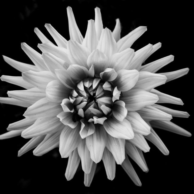 """Colourless Flower"" stock image"