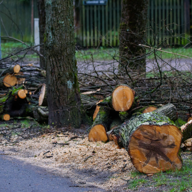 """Sawn fallen tree on the street in city."" stock image"