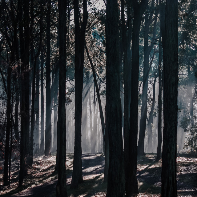 """Dark misty morning"" stock image"
