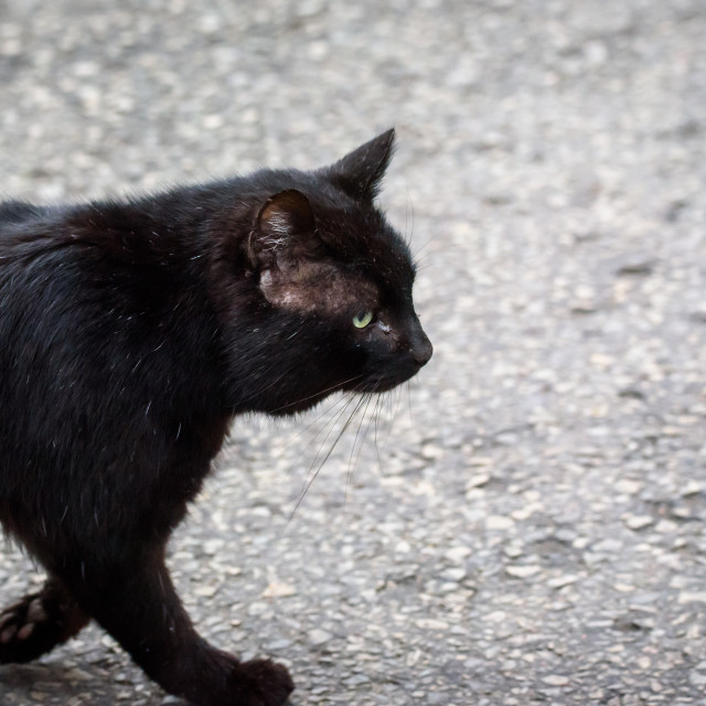 """""""Black stray cat on the stree in city."""" stock image"""