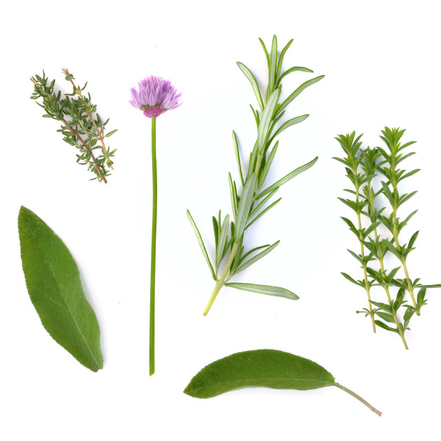 """various fresh aromatic herbs on white background"" stock image"