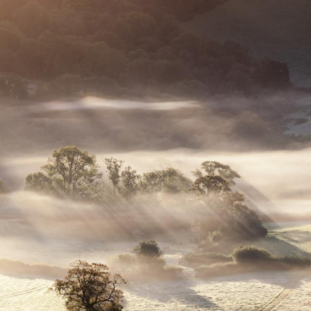 """""""Fog Under Wind Tor, Dartmoor"""" stock image"""