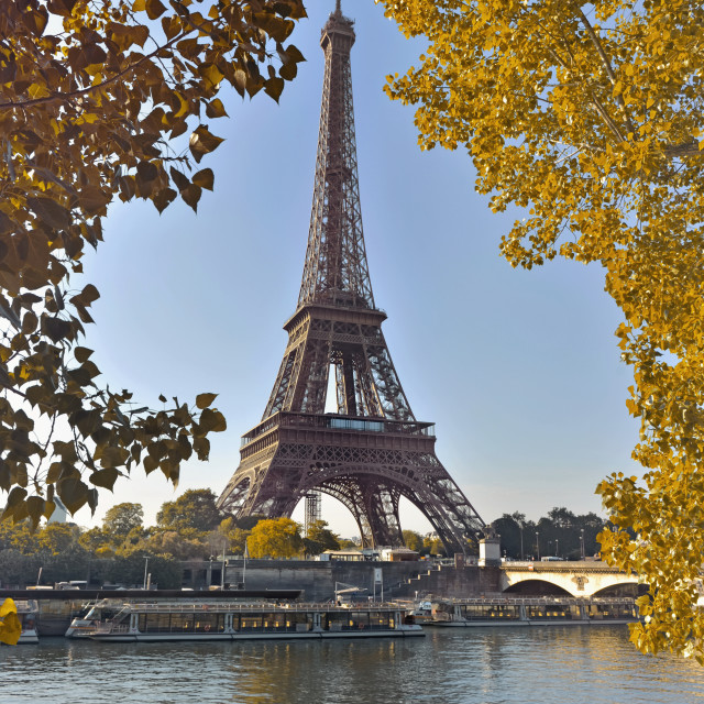"""""""eiffel tower in paris between yellow foliage in autumn view from seine river"""" stock image"""
