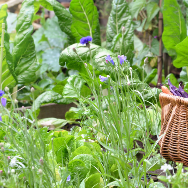 """""""fresh vegetables in a wicker basket among green leaf and flowers"""" stock image"""