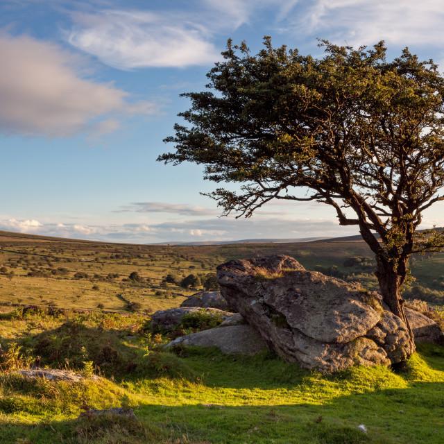 """Emsworthy Rocks Tree"" stock image"