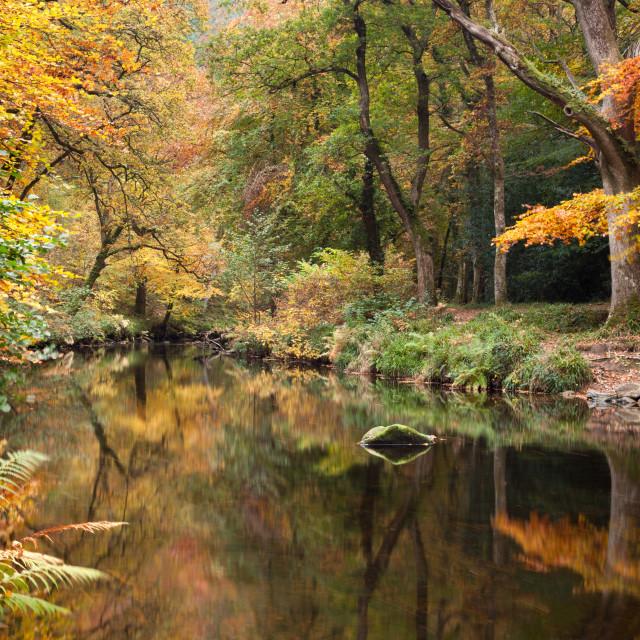 """Autumnal River Teign at Fingle Bridge"" stock image"