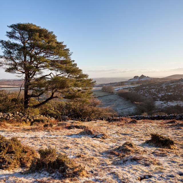 """Frosty Dartmoor morning"" stock image"