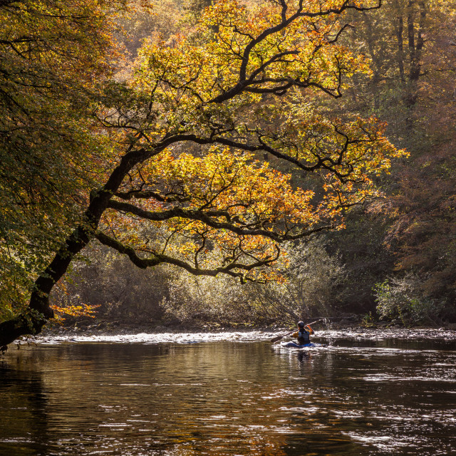 """Kayaker on the River Dart in Hembury Woods"" stock image"