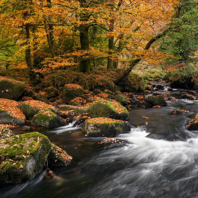 """Autumnal River Dart"" stock image"