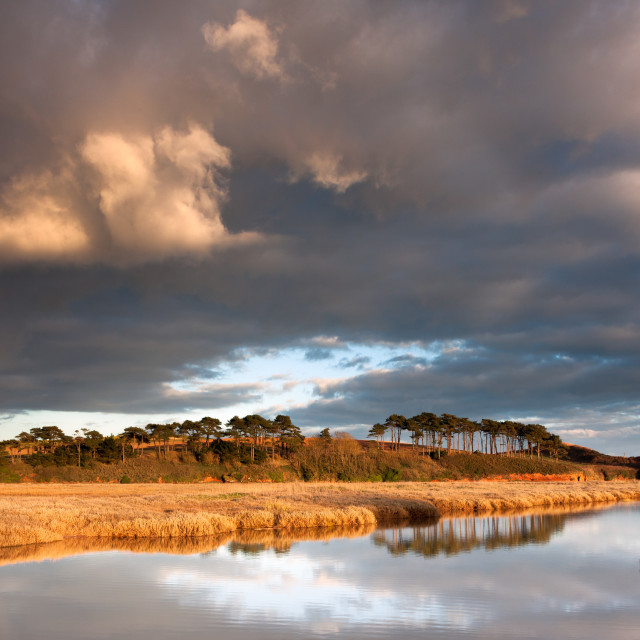 """""""Late afternoon sun at the Otter Estuary"""" stock image"""