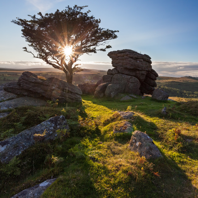 """Starburst Tree Emsworthy Rocks"" stock image"