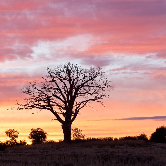 """Sunset Silhouette Tree"" stock image"