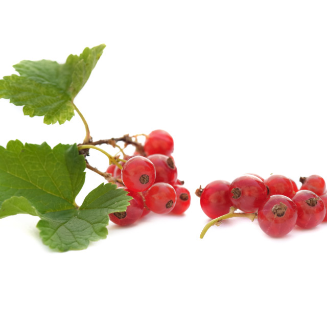 """little branch of red currant isolated on white background"" stock image"
