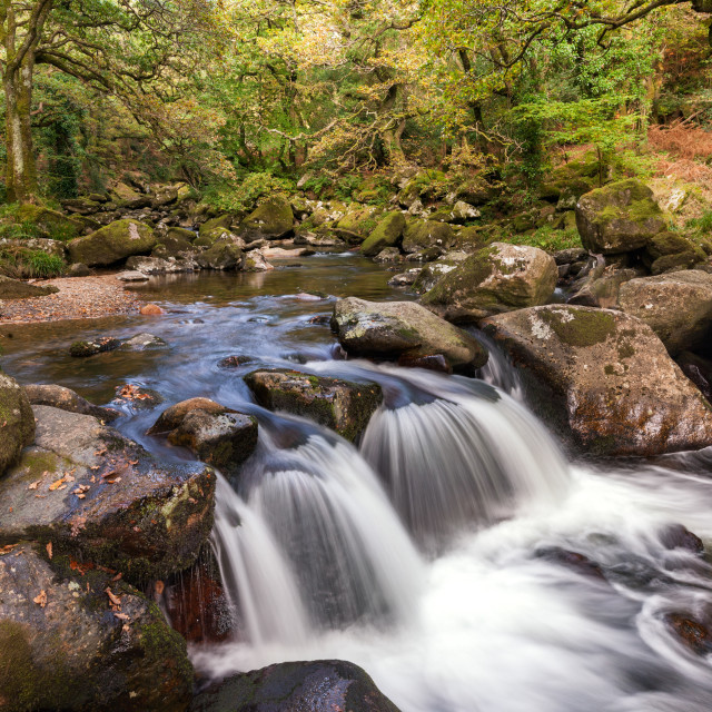 """""""Falls on the Plym, Dewerstone Woods"""" stock image"""