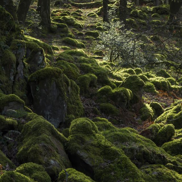 """""""Enchanted woodland"""" stock image"""