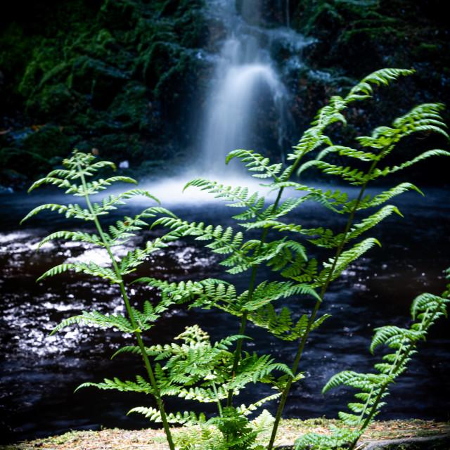 """A Northumberland Waterfall - Hindhope Linn"" stock image"