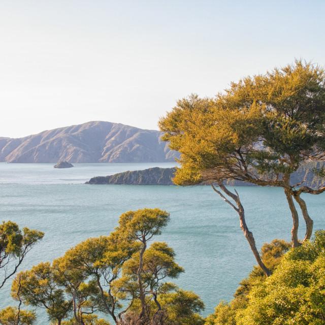 """Marlborough Sounds in New Zealand"" stock image"