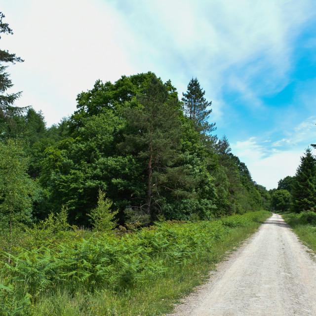 """""""A Straight Road Runs Through the Forest"""" stock image"""