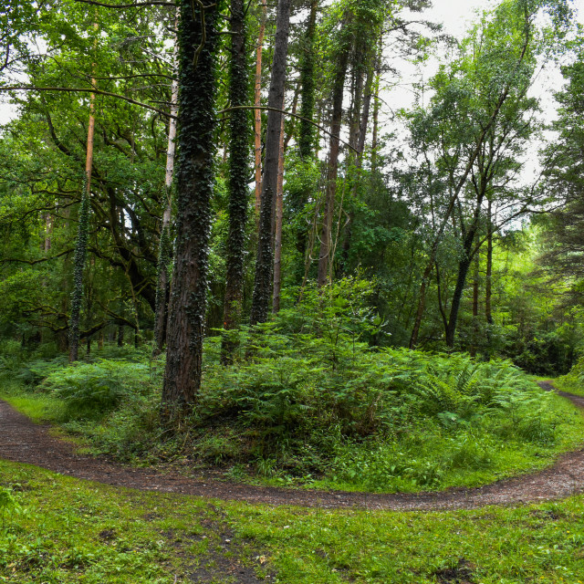 """""""Curvaceous Forest Track"""" stock image"""