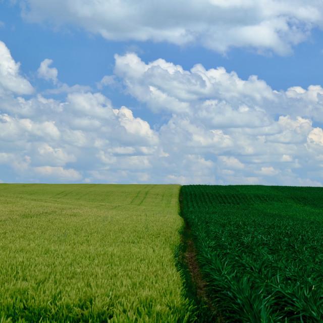 """Summer Fields"" stock image"