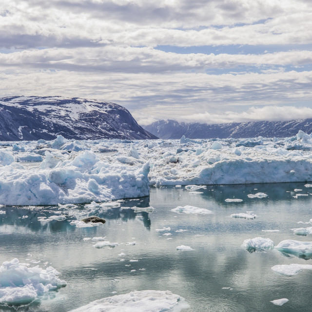 """""""The floating ice all over the sea, Ilulissat"""" stock image"""