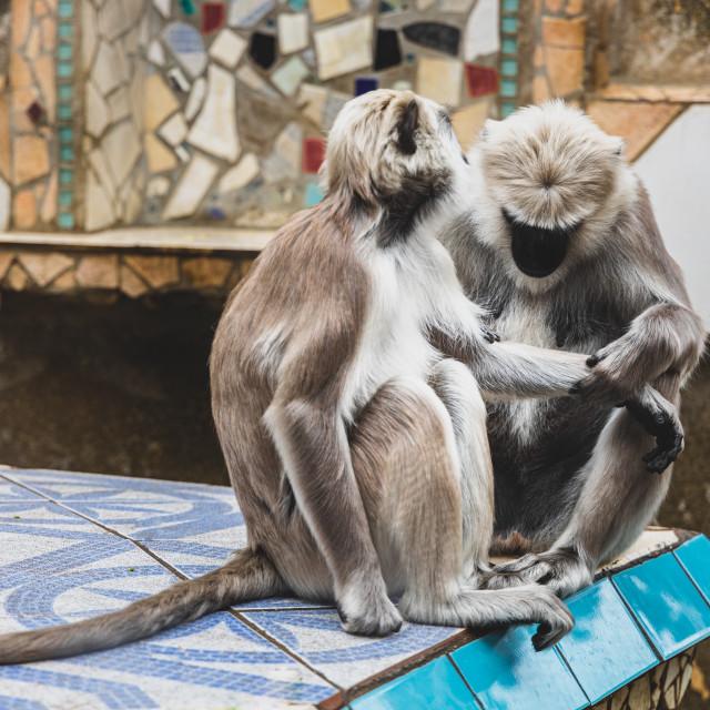 """New World Monkeys at London Zoo"" stock image"