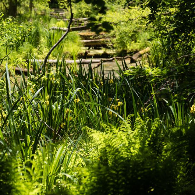 """Nature in the Kaltenhofer Moor in Schleswig-Holstein in Germany"" stock image"