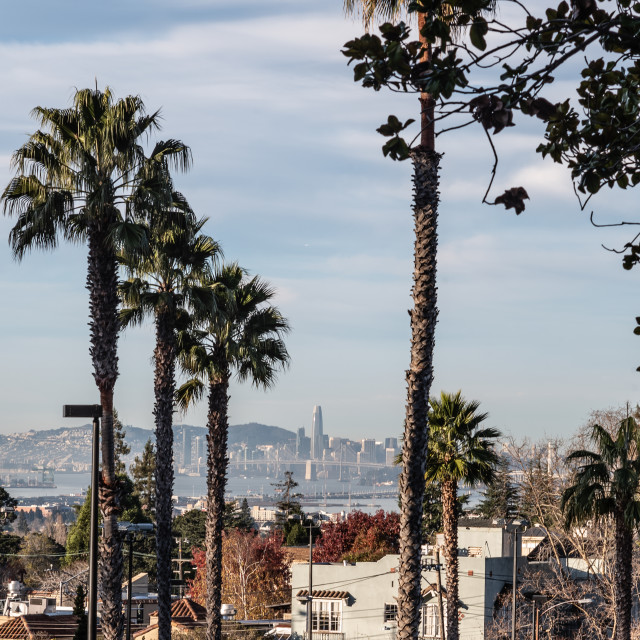 """My World - San Francisco Through Palm Trees"" stock image"