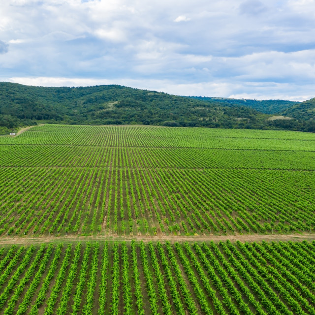 """""""Aerial view of a vineyard."""" stock image"""