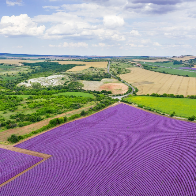 """""""Aerial view of lavender field."""" stock image"""